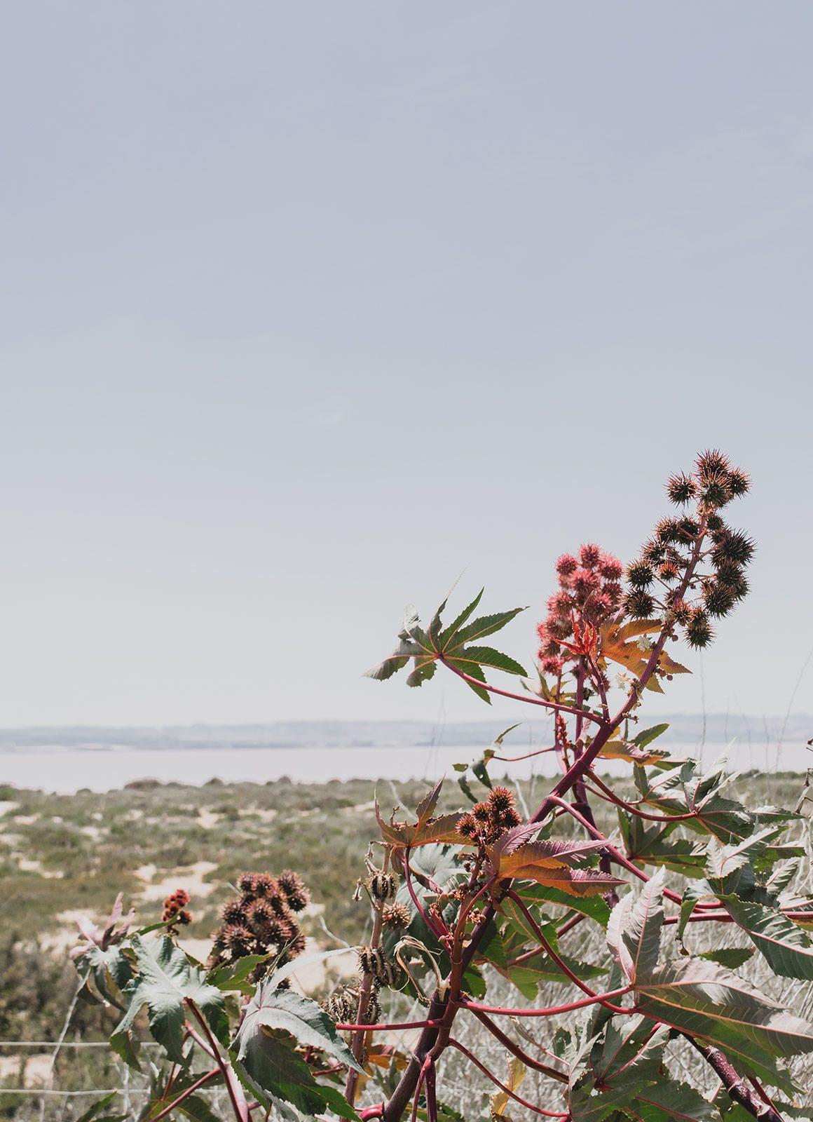 Barcelona to Madrid Road Trip - Laguna Salada, Torrevieja, Spain (Pink Salt Lake)
