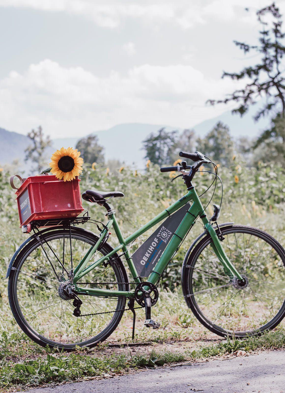 Swiss Sunflower Field - Zug Bike Rental