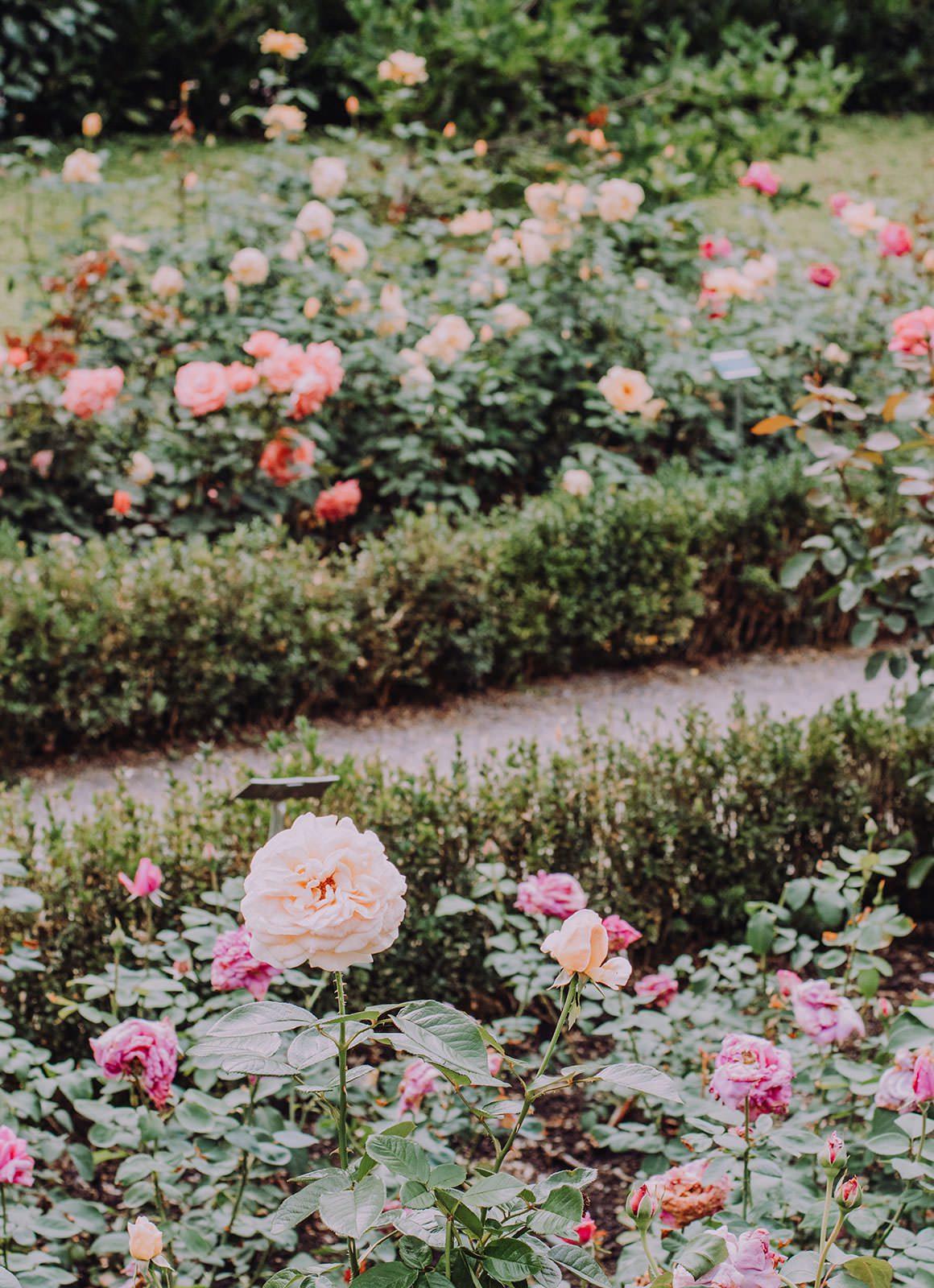 Bern Rose Garden (Rosen Garten)