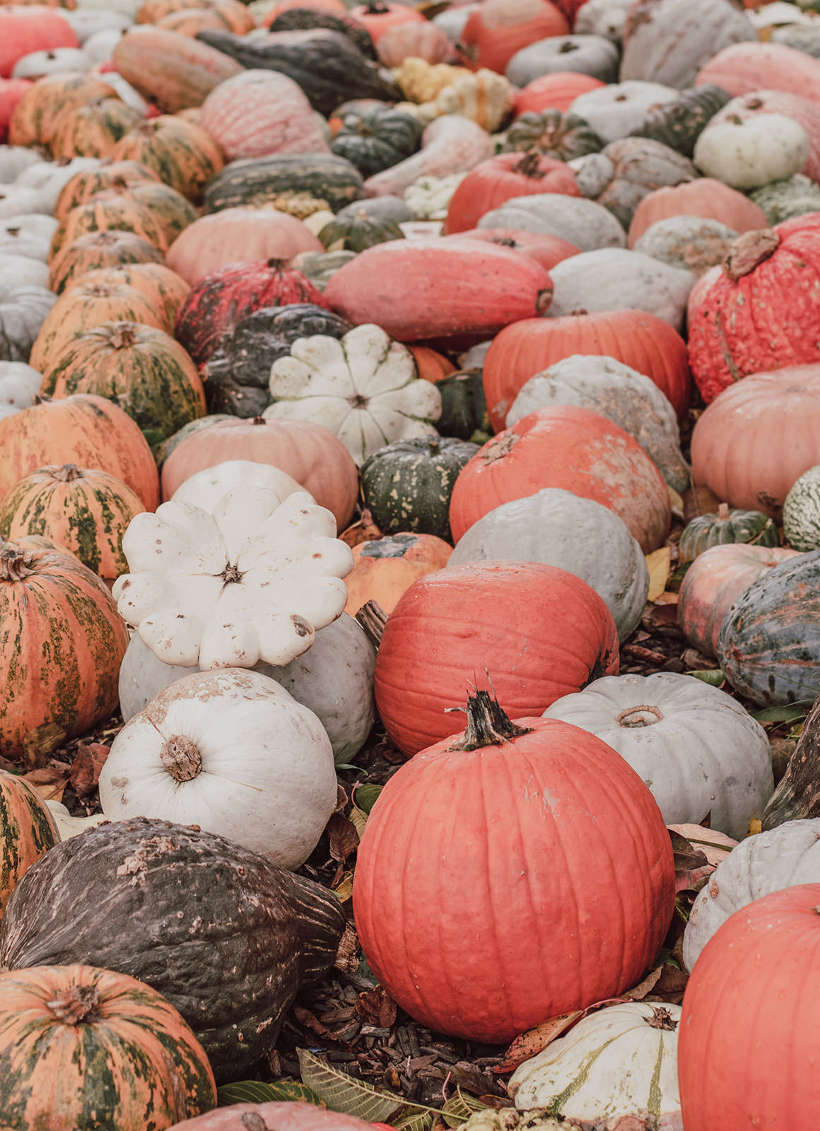A day at Jucker Farm Pumpkin Festival in Switzerland