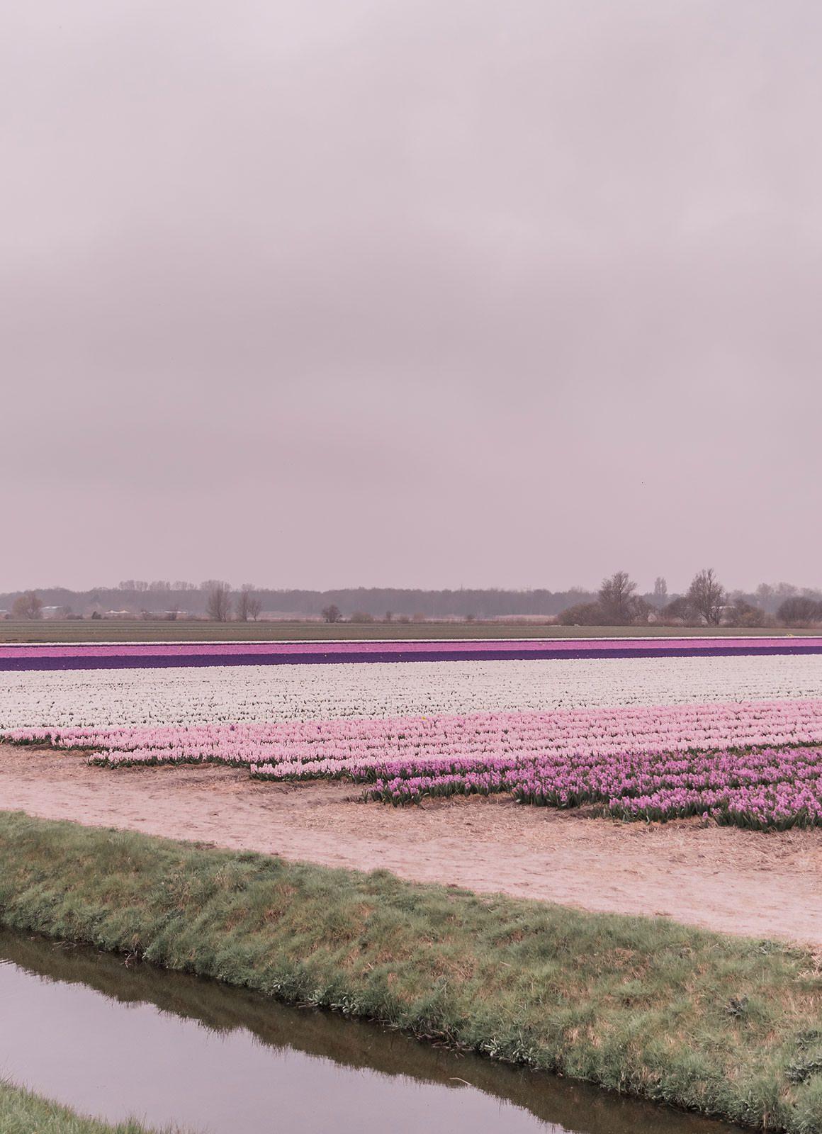 Weekend in the Netherlands - Lisse, Keukenhof