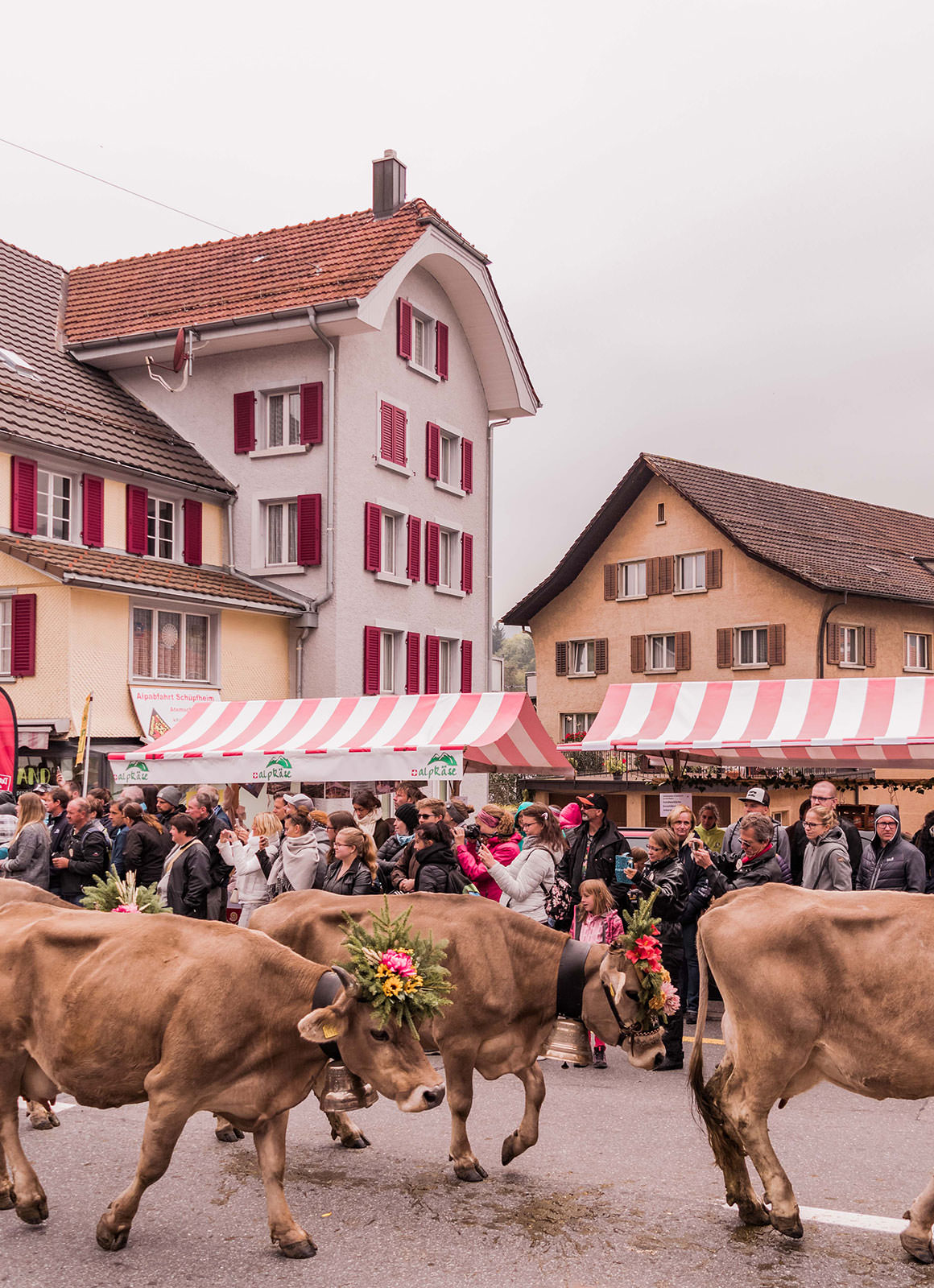 A trip to Entlebuch - Alpine Cattle Descent