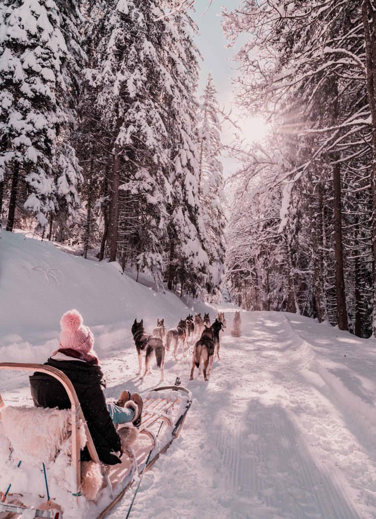 Husky Sledding Switzerland