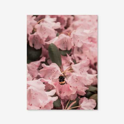Eco Friendly Bee Photography Print