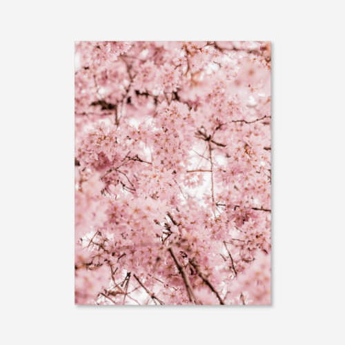 Eco Friendly Floral Cherry Blossom Photography Print