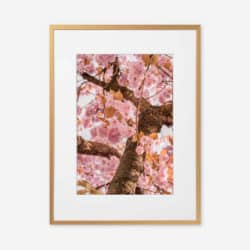 Eco Friendly Floral Blossom Photography Print