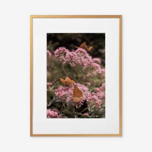 Eco Friendly Butterfly Photography Print