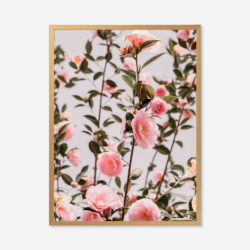 Eco Friendly Boho Floral Camellia Photography Print
