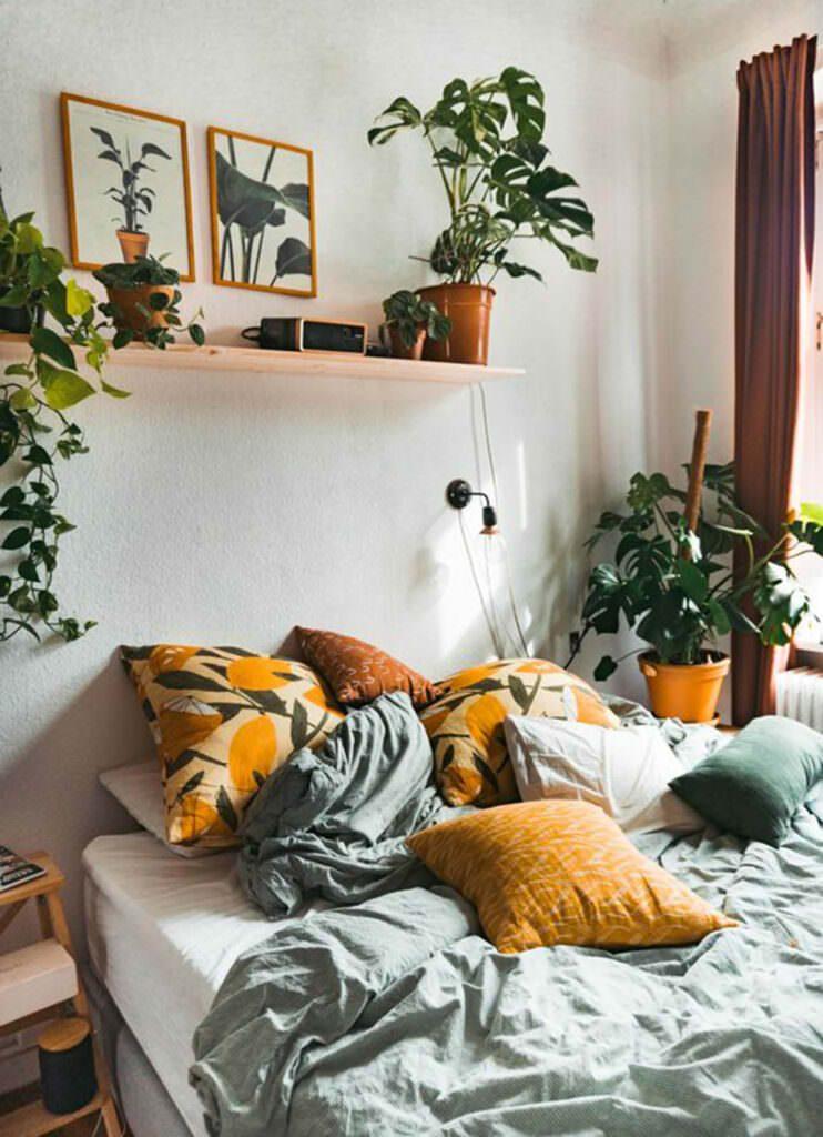 Chromophobia Indoor Plants